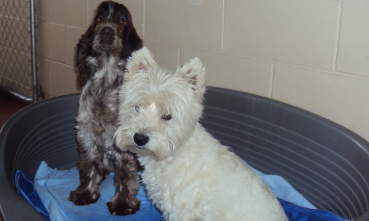 A Country Home Boarding Kennel Yorkshire Terrier