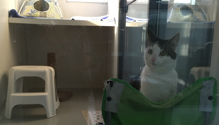 A Country Home Cattery Unit